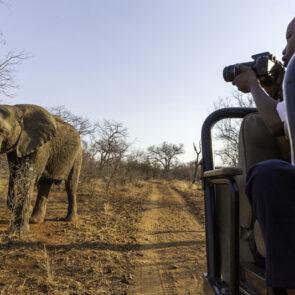 immagine con soggetto che scatta foto a elefante del progetto GITZO LÈGENDE di Vitec Imaging Solutions